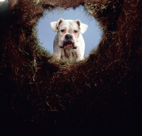 Será que a cachorrada tá saindo do buraco?
